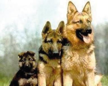 Anti Aboiement Ultrason Puissant - 15 techniques à savoir - Education du chien - 15 minutes par jour